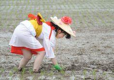 平成26年5月25日『お田植え行事』の 早乙女奉仕者。ブログ「いんぎら~っと しまっし」様より掲載許可をいただきました。
