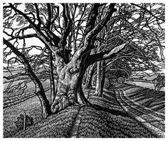 Beech Tree Cloister by Howard Phipps - Linocut Woodcut Art, Linocut Prints, Art Prints, Block Prints, Gravure Photo, Engraving Art, Scratchboard, Landscape Drawings, Woodblock Print