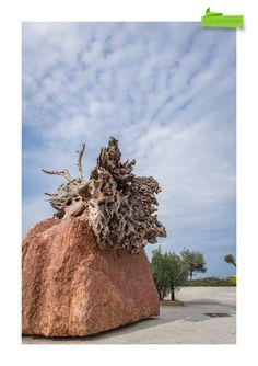 "Work commissioned by ""Premiati Oleifici Barbera"", Custonaci (Sicily)  All right reserved. ©2015 Claudio Parisi"