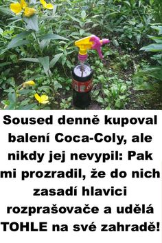 Coca Cola, Garden, Bird Bath Garden, Garten, Coke, Lawn And Garden, Gardens, Gardening, Outdoor