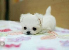 It's like a small white fluffy cloud