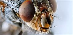 Fly Symbolism - Spirit Animal Totems and Messages Spirit Animal Totem, Animal Totems, House Fly Infestation, Zoom Wallpaper, Insect Eyes, Fly Go, Get Rid Of Flies, Fruit Flies, Pets