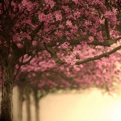Cherry Blossom Lane A Fine Art Nature Photography door Raceytay