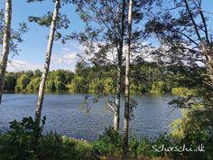 Immer wieder schön, der Bültener Waldsee... Outdoor, Love Of My Life, Woodland Forest, Landscape, Nice Asses, Outdoors, Outdoor Games, The Great Outdoors