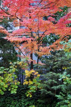 Fall Trees leaves