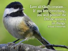 Inspirational Verses, Gods Creation, Catholic, Mystery, Love You, Te Amo, Je T'aime, I Love You, Roman Catholic