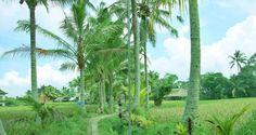 Ubud Bali バリ島 ウブド