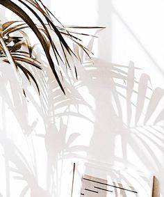 White Room Decor Ideas for a Fresh Summer Cream Aesthetic, Summer Aesthetic, Aesthetic Photo, Aesthetic Pictures, Aesthetic Iphone Wallpaper, Aesthetic Wallpapers, White Room Decor, Light And Shadow, Wall Collage