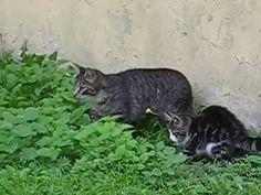 Cute animals - Lovely Kitten hunting - YouTube My Animal, Rats, Hunting, Kitten, Cute Animals, Wildlife, Videos, Youtube, Kittens