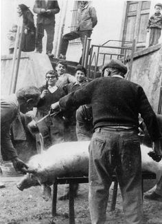 Italy ~ City of Roccacasale: Killing the Pig (1965)