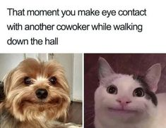 Hilarious Memes That Will Make Every Introvert Laugh Out Loud 9gag Funny, Stupid Funny Memes, Funny Relatable Memes, You Funny, Really Funny, Funny Cute, Funniest Memes, Funny Things, Funny Humor