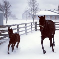 Aaroness and her foal by Perfect Soul play at North Ridge Farms(Image via Keith McCalmont)