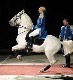 Lippizaner, Lipizzan, Horse Training, Photographs, Events, Horses, Stars, Animals, Animales