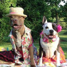Hawaiian PITS #pitbulllove #pitbulls #pitbull #dogcostume