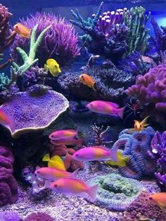 Home Aquarium Ideas: The Aquarium Buyers Guide Akvarijum Studio ReefrooM - salt water fish tank Coral Reef Aquarium, Saltwater Aquarium Fish, Marine Aquarium, Coral Reefs, Ocean Aquarium, Betta Aquarium, Saltwater Tank, Freshwater Aquarium, Betta Fish