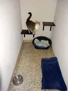Midtown Pet Centre is the Gold Coast's premier pet motel. Our purpose built, luxury cattery is the ultimate holiday retreat for our feline guests. Cattery, Gold Coast, Centre, Dog Cat, Pets