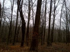 grimblackforest