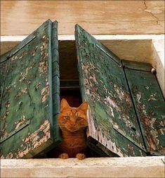 Oh, hello ginger! #cat #ginger #kitty