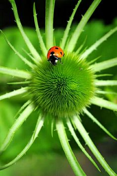 Sweet little lady bug...visit my garden! <pin by Grama Deeji on Flowers Bugs Snails>