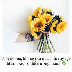 Instagram: duong_dip