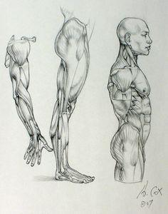 Anatomy 03 by ~andrewcox on deviantART