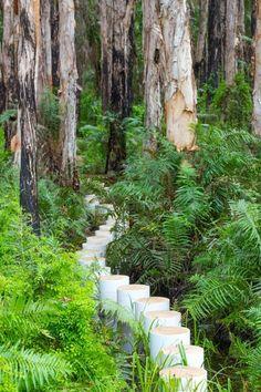 Parperbark Forest Boardwalk, Agnes Water, Queensland - Australia