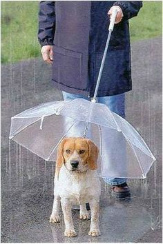Hunde_regenschirm