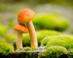 Mushroom Photography, 8x10 Print, nature photography, dreamy romantic whimsical nature wall art, moss green, forest floor, shroom woodland