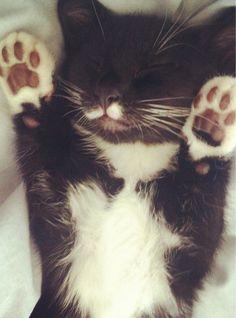 "Kitty paws! ""Hug me! I'm cute!"""