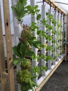 Hydroponic Gardening Ideas Two Vertical Garden Towers Kit plants - Hydroponic / Aquaponics Vertical Herb Garden, Hydroponics Diy, Plants, Tower Garden, Vertical Garden Indoor, Organic Gardening, Garden Vines, Hydroponics, Vertical Vegetable Garden