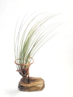 A personal favorite from my Etsy shop https://www.etsy.com/listing/489450375/air-plant-tillandsia-display-holder