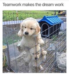 Golden Retriever puppy teamwork by isabelle Cute Funny Animals, Funny Animal Pictures, Cute Baby Animals, Funny Dogs, Animals And Pets, Random Pictures, Fluffy Animals, Funny Memes, Funny Photos
