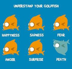 Funny pictures about Understand your goldfish. Oh, and cool pics about Understand your goldfish. Also, Understand your goldfish. Funny Images Gallery, Funny Photos, Funny Dogs, Funny Animals, Indian Funny, Funny Couples, Funny Cartoons, Funny Memes, Just For Laughs