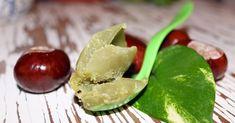 Přírodní kosmetika receptyblog o výrobě přírodní kosmetiky Avocado, Fruit, Health, Food, Alcohol, Lawyer, Health Care, Essen, Meals