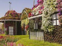 Image result for dubai miracle garden 2018 bulk hd wallpapers
