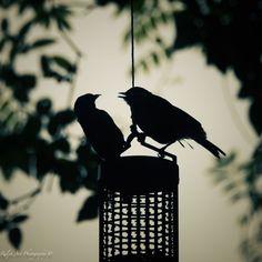 #birds #feed Bird Feeders, Birds, Art Prints, Gallery, Photo S, Outdoor Decor, Day, Home Decor, Art Impressions