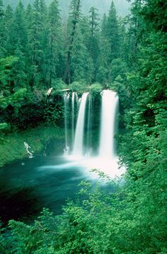 Koosah Falls, Santiam Junction, OR   © Marsha K. Russell