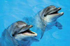 Zoomarine - Marine Park near Albufeira #portugal #dolphins
