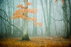Autumn Woods - aqua fog, nature photography, trees