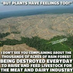 Vegan Truth... Food for thought! The dishonest concern that plants have feelings does not justify funding animal agribusiness. -KK