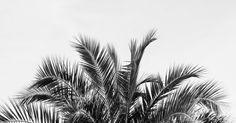 'Palm' by Vera Prins  (August 2015)