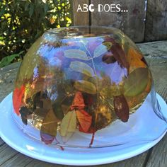 Autumn Exploratory Jelly…, My Favorite, Forest School Activities, Autumn Activities, Seasons Activities, Nature Activities, Therapy Activities, Science Activities, Science Nature, Nursery Activities, Infant Activities