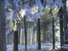 Forest in winter - Pixdaus Winter Landscape, Beautiful World, Snow, Frozen, Trees, Painting, Magic, Outdoor, Art