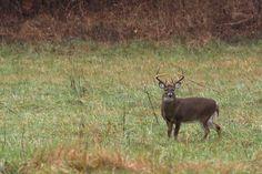 Beautiful wildlife in The Smoky Mountains.