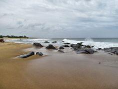 Kovalam Beach, Chennai