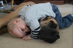 English Mastiff the gentle giant #englishmastiffs #englishmastiff #cute #adorable