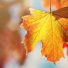 On this #FirstDayofFall lets hope this weekend brings us gorgeous weather #pin