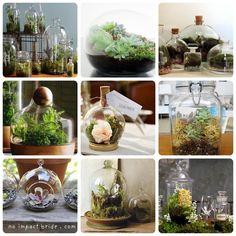 bottle gardens