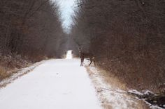 """Can I Go?"" - Wobegon Trail, Stearns County,  By: Kelly Brown, St. Joseph, MN"