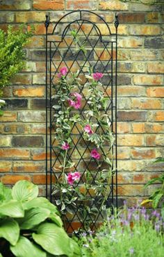 This is another trellis with a Clematis on it. I do think Clematises and metal trellises are made for  each other.